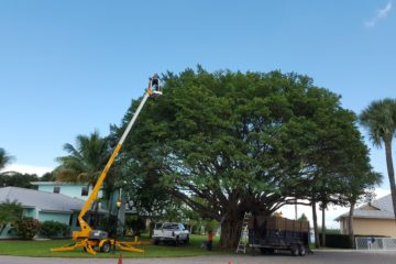 Tree Crown Reduction