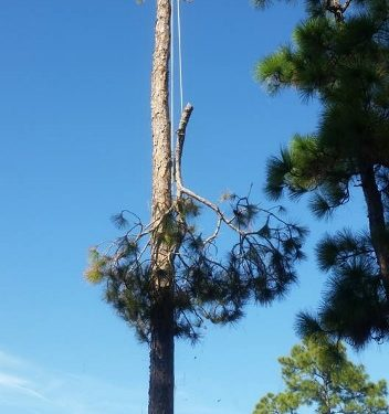 Tree Removal in Stuart FL