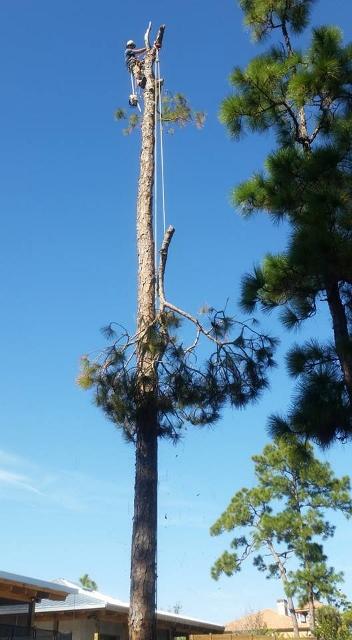 Tree Removal in Stuart FL
